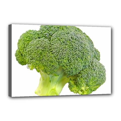 Broccoli Bunch Floret Fresh Food Canvas 18  X 12  by Nexatart