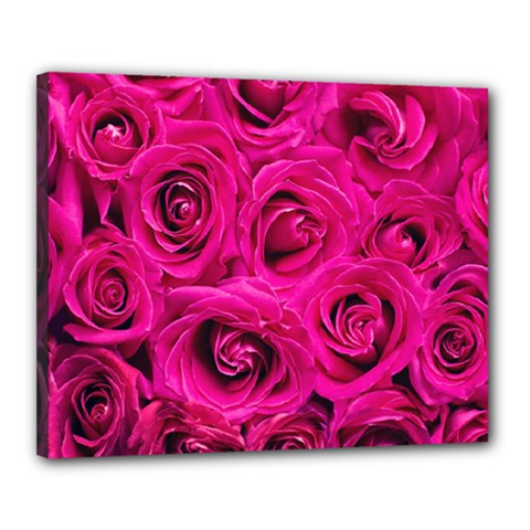 Pink Roses Roses Background Canvas 20  X 16