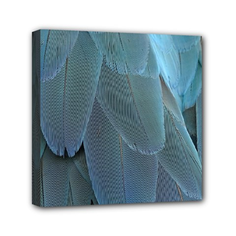 Feather Plumage Blue Parrot Mini Canvas 6  X 6  by Nexatart