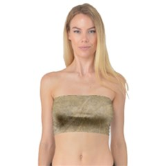 Abstract Forest Trees Age Aging Bandeau Top