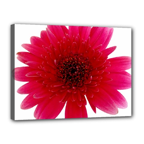 Flower Isolated Transparent Blossom Canvas 16  X 12