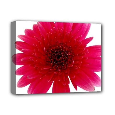 Flower Isolated Transparent Blossom Deluxe Canvas 14  X 11  by Nexatart