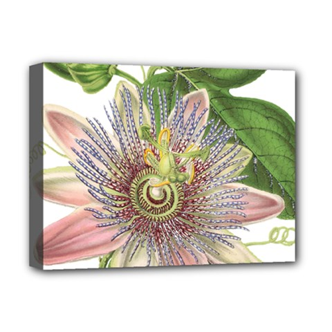 Passion Flower Flower Plant Blossom Deluxe Canvas 16  X 12   by Nexatart