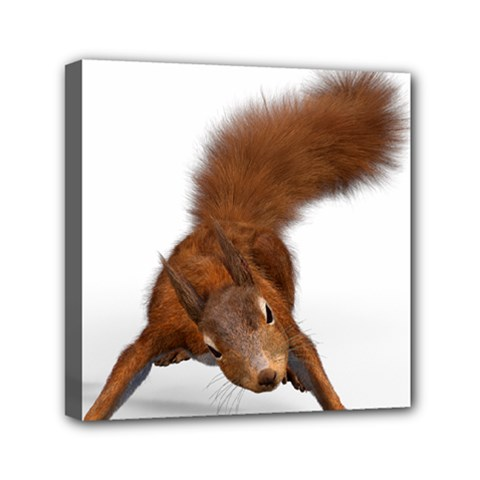 Squirrel Wild Animal Animal World Mini Canvas 6  X 6  by Nexatart