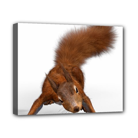 Squirrel Wild Animal Animal World Canvas 10  X 8  by Nexatart