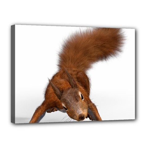 Squirrel Wild Animal Animal World Canvas 16  X 12  by Nexatart