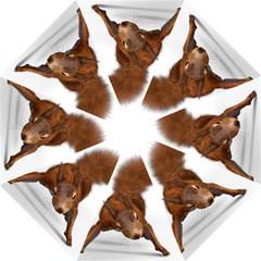 Squirrel Wild Animal Animal World Straight Umbrellas by Nexatart