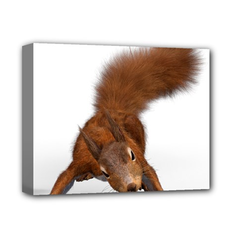 Squirrel Wild Animal Animal World Deluxe Canvas 14  X 11