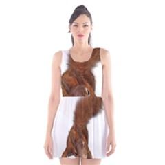 Squirrel Wild Animal Animal World Scoop Neck Skater Dress