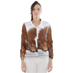 Squirrel Wild Animal Animal World Wind Breaker (women)