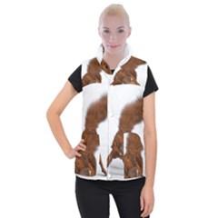 Squirrel Wild Animal Animal World Women s Button Up Puffer Vest
