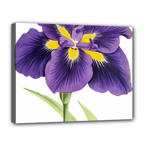 Lily Flower Plant Blossom Bloom Canvas 14  X 11  by Nexatart