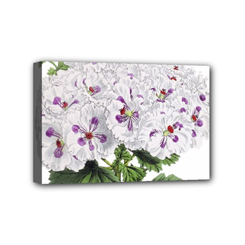 Flower Plant Blossom Bloom Vintage Mini Canvas 6  X 4