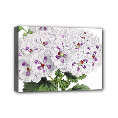 Flower Plant Blossom Bloom Vintage Mini Canvas 7  X 5
