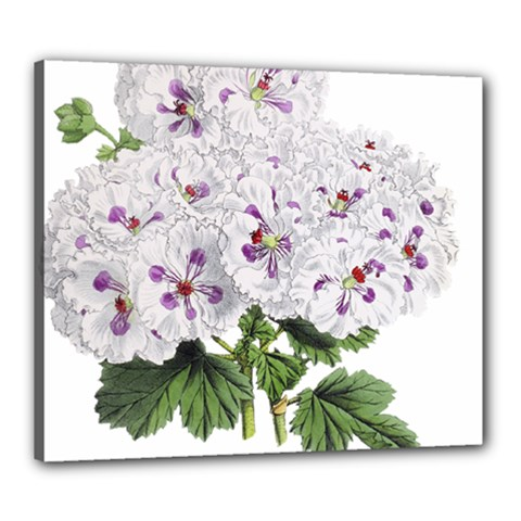 Flower Plant Blossom Bloom Vintage Canvas 24  X 20