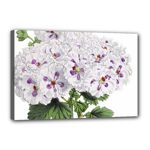 Flower Plant Blossom Bloom Vintage Canvas 18  X 12