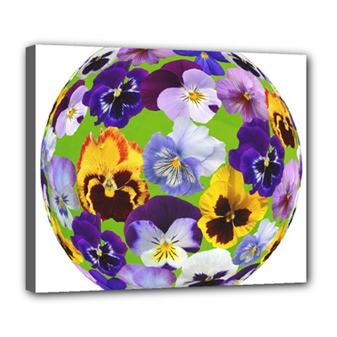 Spring Pansy Blossom Bloom Plant Deluxe Canvas 24  X 20   by Nexatart