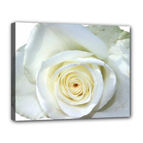 Flower White Rose Lying Canvas 14  X 11  by Nexatart