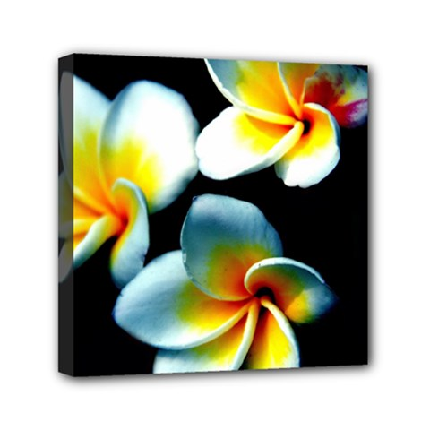 Flowers Black White Bunch Floral Mini Canvas 6  X 6  by Nexatart