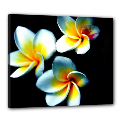 Flowers Black White Bunch Floral Canvas 24  X 20