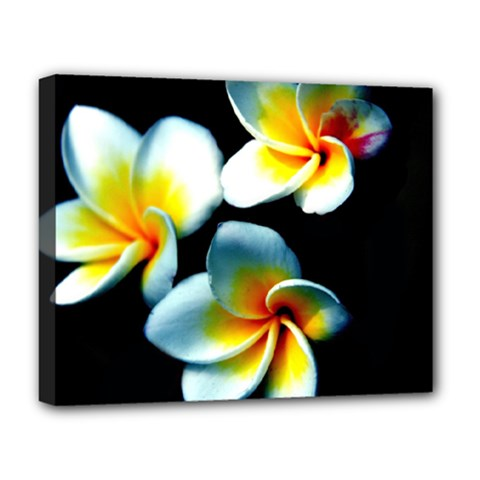 Flowers Black White Bunch Floral Deluxe Canvas 20  X 16   by Nexatart