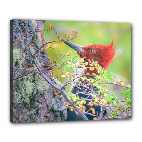 Woodpecker At Forest Pecking Tree, Patagonia, Argentina Canvas 20  X 16  by dflcprints