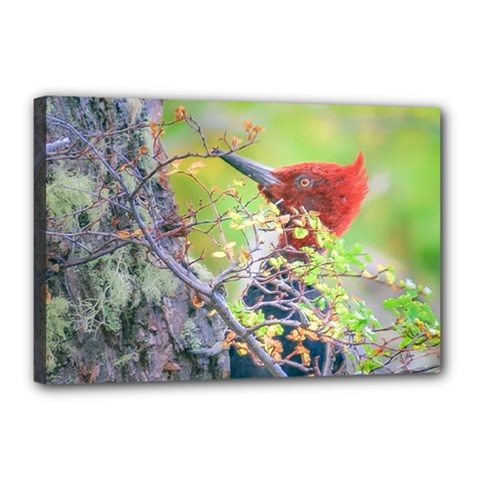 Woodpecker At Forest Pecking Tree, Patagonia, Argentina Canvas 18  X 12  by dflcprints