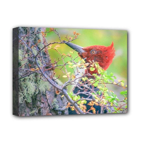 Woodpecker At Forest Pecking Tree, Patagonia, Argentina Deluxe Canvas 16  X 12   by dflcprints