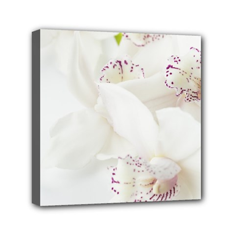 Orchids Flowers White Background Mini Canvas 6  X 6