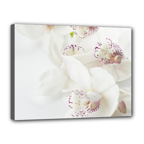 Orchids Flowers White Background Canvas 16  X 12  by Nexatart