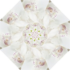 Orchids Flowers White Background Folding Umbrellas