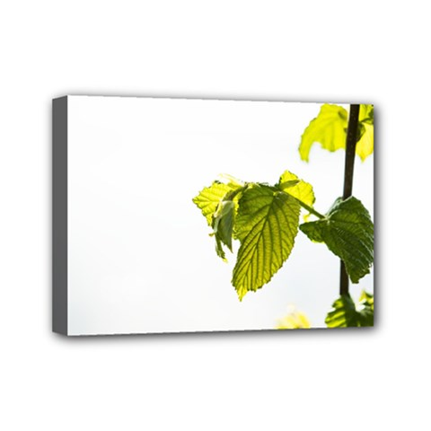 Leaves Nature Mini Canvas 7  X 5