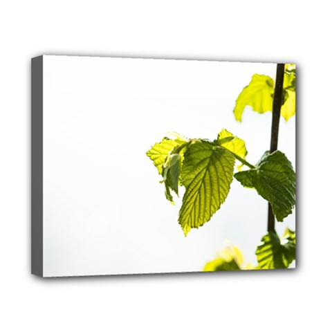 Leaves Nature Canvas 10  X 8  by Nexatart