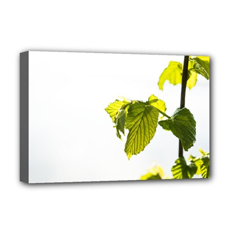 Leaves Nature Deluxe Canvas 18  X 12