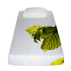 Leaves Nature Fitted Sheet (single Size) by Nexatart