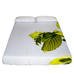 Leaves Nature Fitted Sheet (california King Size) by Nexatart