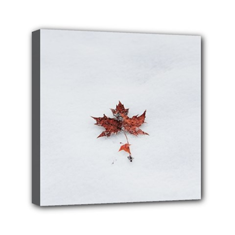 Winter Maple Minimalist Simple Mini Canvas 6  X 6  by Nexatart