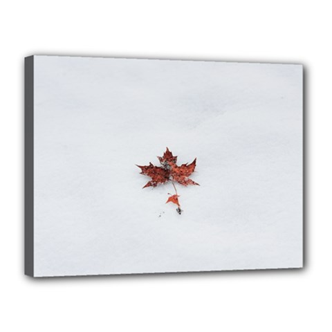 Winter Maple Minimalist Simple Canvas 16  X 12  by Nexatart