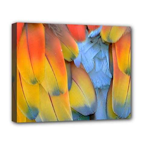 Spring Parrot Parrot Feathers Ara Deluxe Canvas 20  X 16   by Nexatart