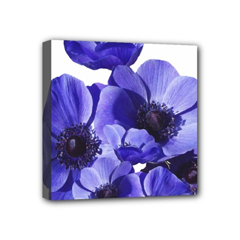 Poppy Blossom Bloom Summer Mini Canvas 4  X 4  by Nexatart