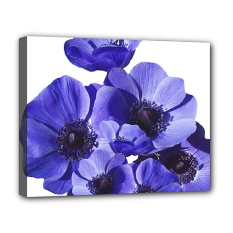 Poppy Blossom Bloom Summer Deluxe Canvas 20  X 16