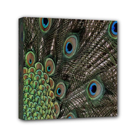 Close Up Of Peacock Feathers Mini Canvas 6  X 6  by Nexatart