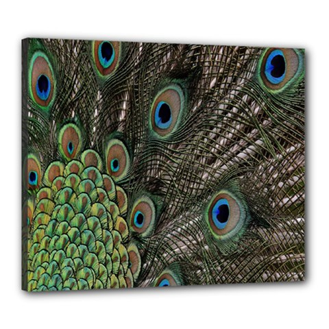 Close Up Of Peacock Feathers Canvas 24  X 20  by Nexatart