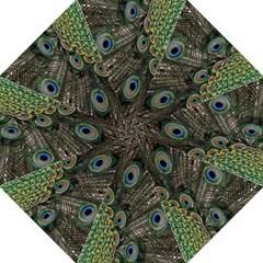 Close Up Of Peacock Feathers Folding Umbrellas