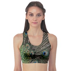 Close Up Of Peacock Feathers Sports Bra
