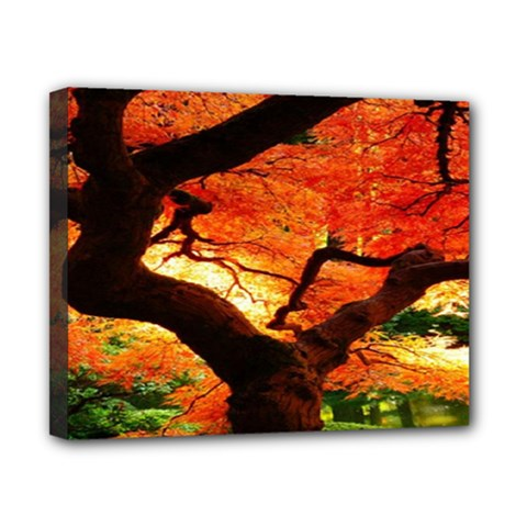 Maple Tree Nice Canvas 10  X 8