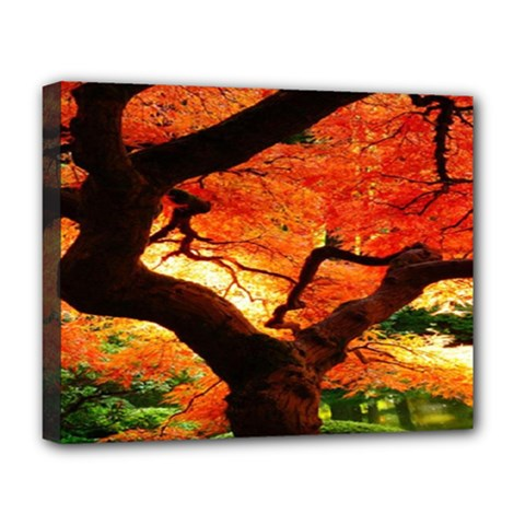 Maple Tree Nice Deluxe Canvas 20  X 16   by BangZart