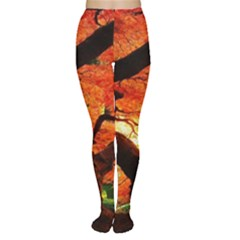Maple Tree Nice Women s Tights