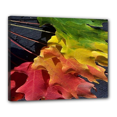 Green Yellow Red Maple Leaf Canvas 20  X 16  by BangZart