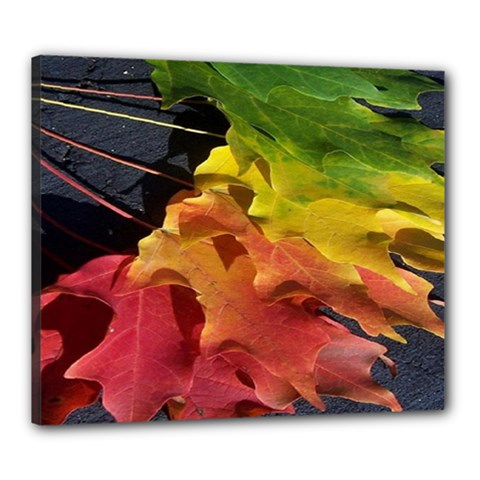 Green Yellow Red Maple Leaf Canvas 24  X 20